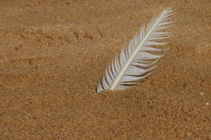 Quill in Sand