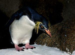 Penguin Slog